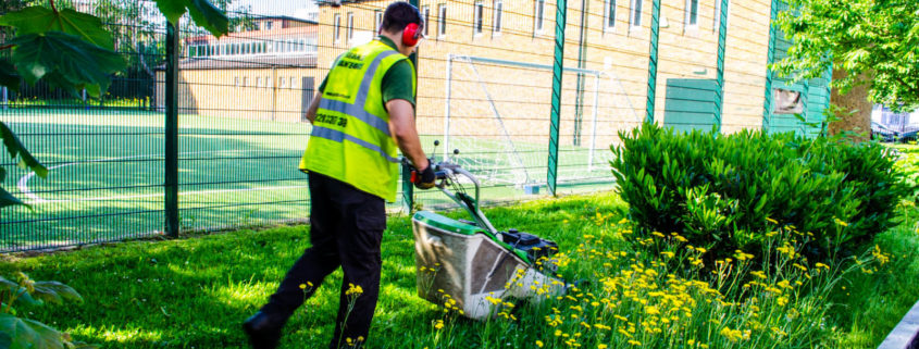 Grass Barbers Weed Control Services in London and Surrey