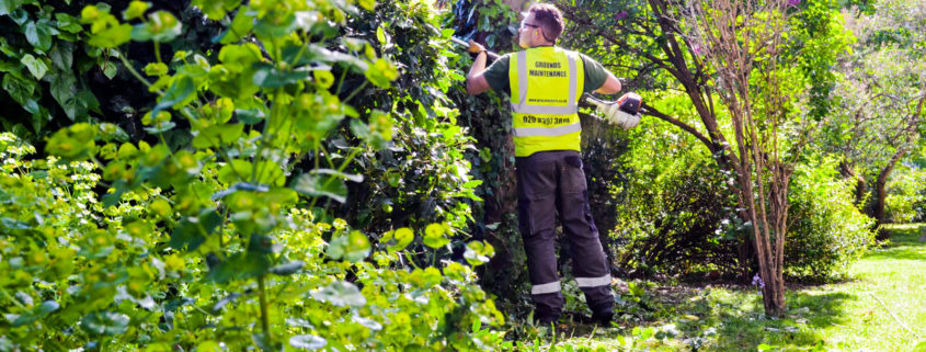 Grass Barbers Hedge Trimming Services in London and Surrey