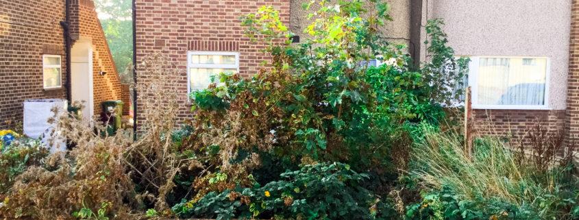 Garden Jungle Clearance Project in Bexleyheath DA7