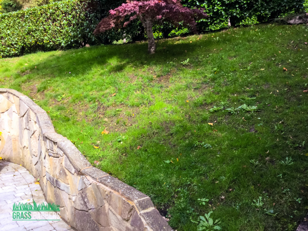 Garden maintenance project in woldingham cr3 grass barbers for The garden maintenance company