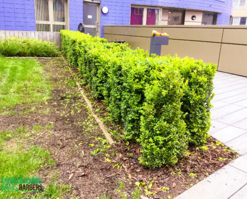 Commercial Grounds Maintenance Project in Islington N7