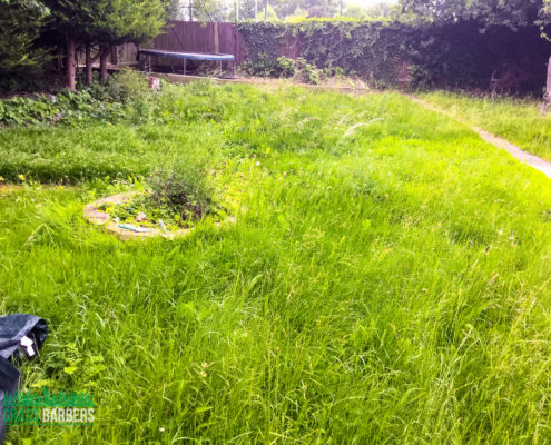 Garden Clearance Project in Carshalton SM5