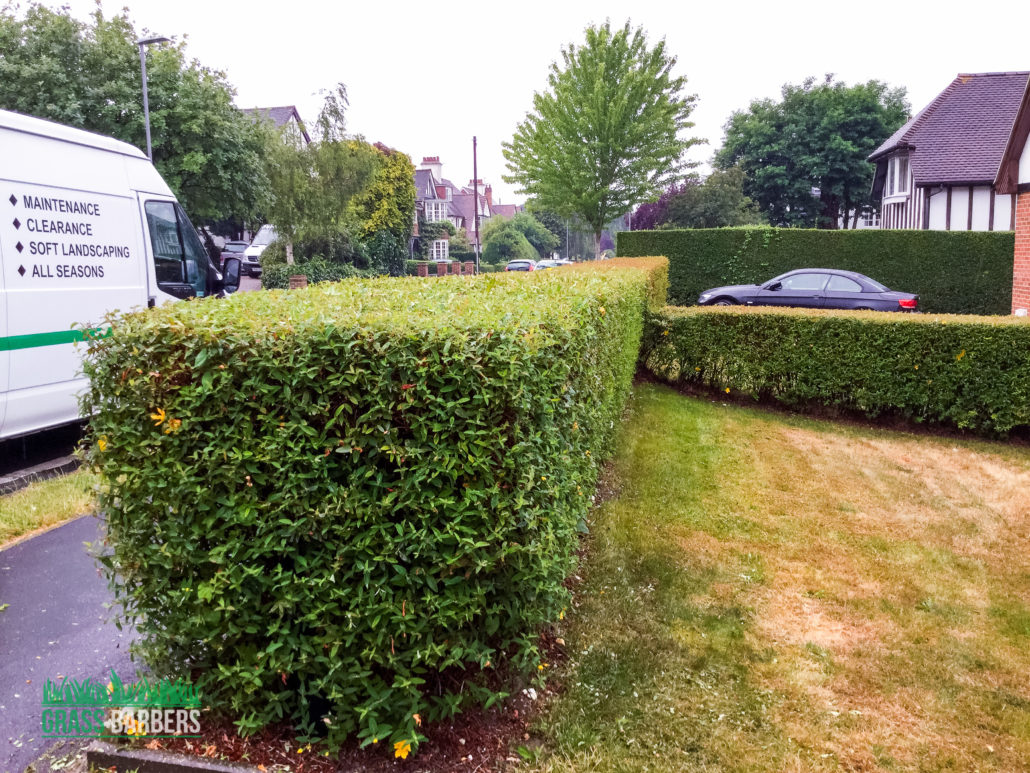 Grass cutting and garden maintenance project in purley cr8 for Garden maintenance