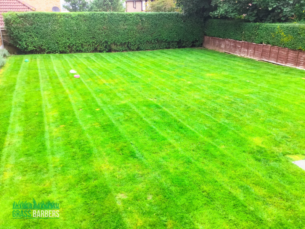 Grass cutting and garden maintenance project in purley cr8 for Local garden maintenance
