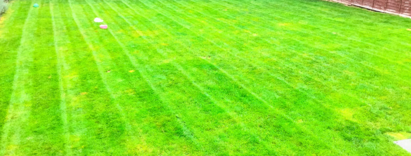 Grass Cutting and Garden Maintenance project in Purley CR8