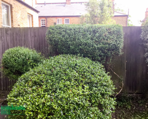 Grass Cutting and Gardening Project in Clapham SW4