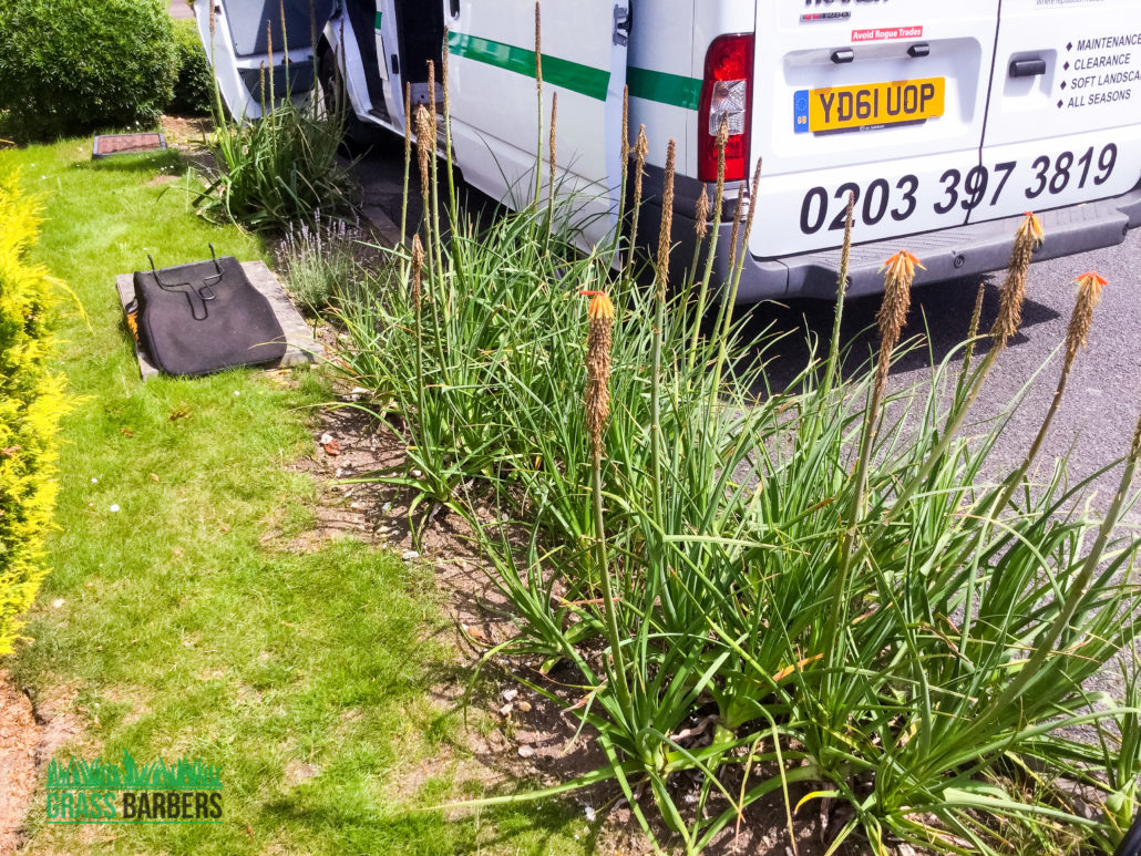 Lawn And Garden Maintenance : Lawn care and garden maintenance project in wallington sm