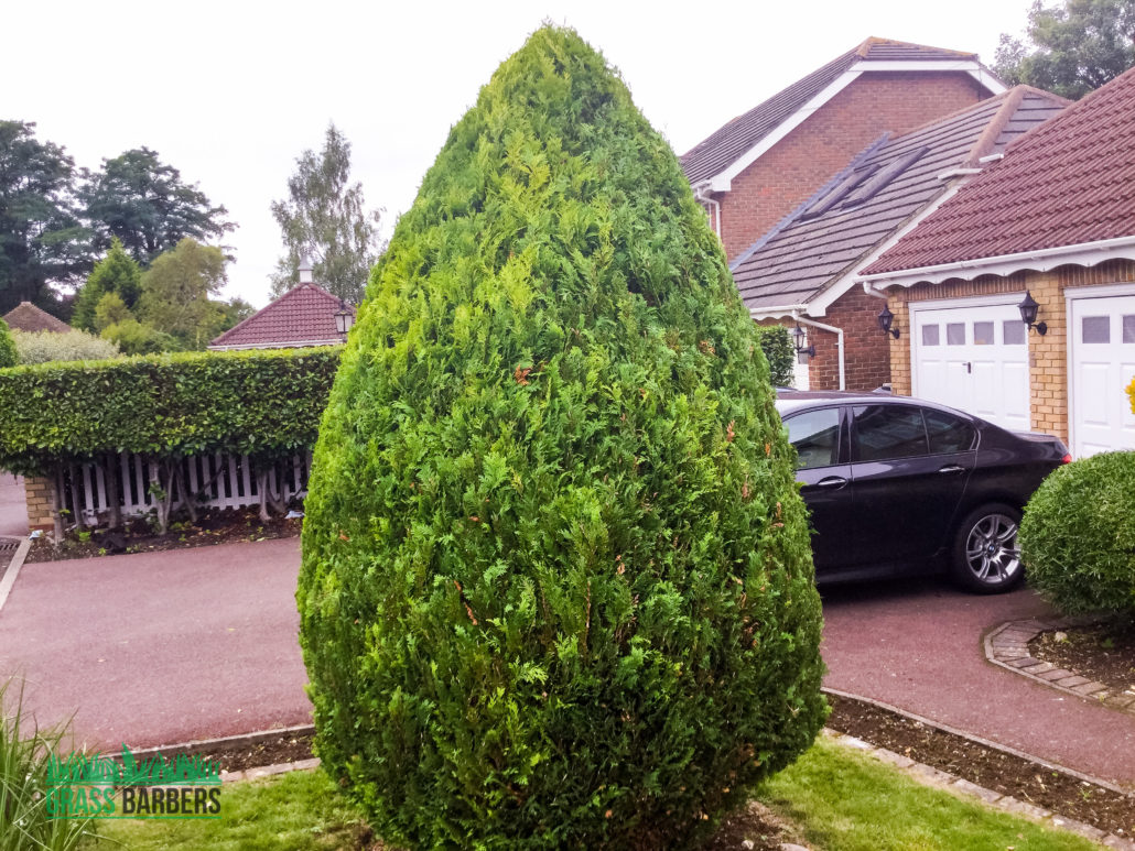 Lawn care and garden maintenance project in wallington sm6 for Lawn and garden maintenance