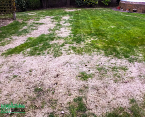 Lawn Care and Garden Maintenance Project in Wallington SM6