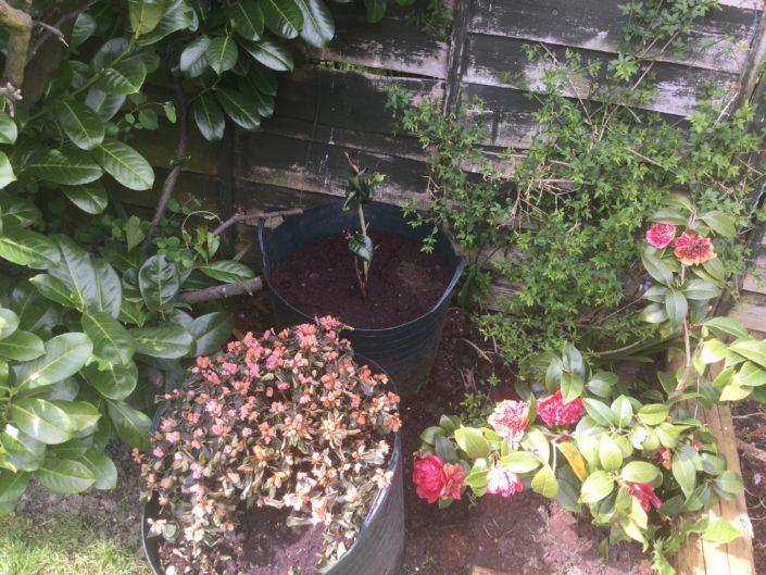 Garden Maintenance Project in Sutton SM3