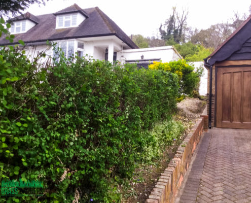 Garden Clearance Project in South Croydon CR2