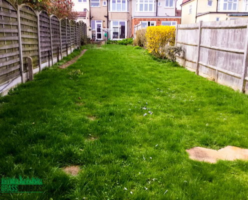Garden Clearance Project in Sutton SM3