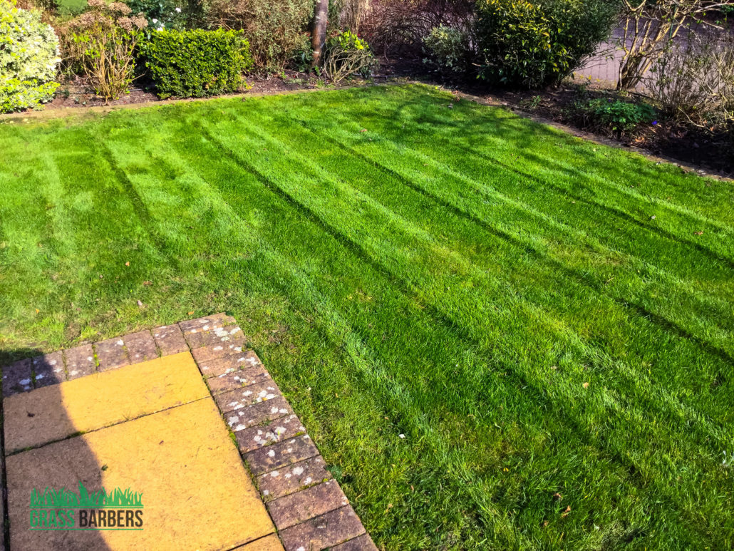 Garden maintenance project in epsom and ewell kt17 for Gardening and maintenance