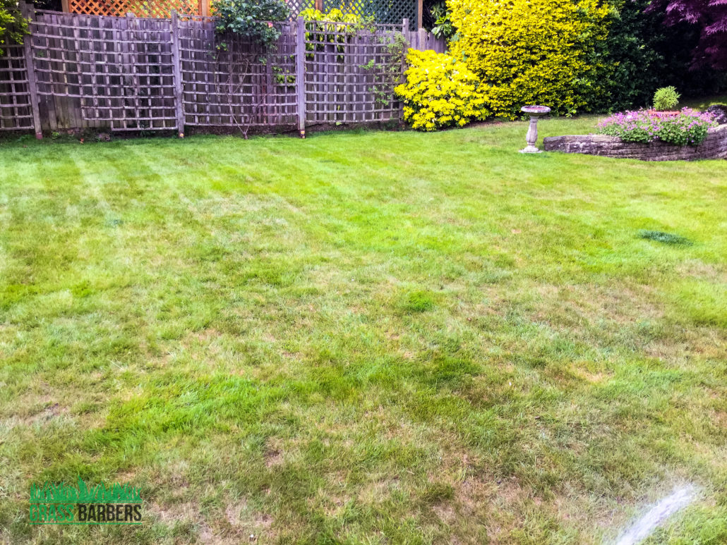 Garden maintenance project in ewell sm2 surrey for Garden maintenance