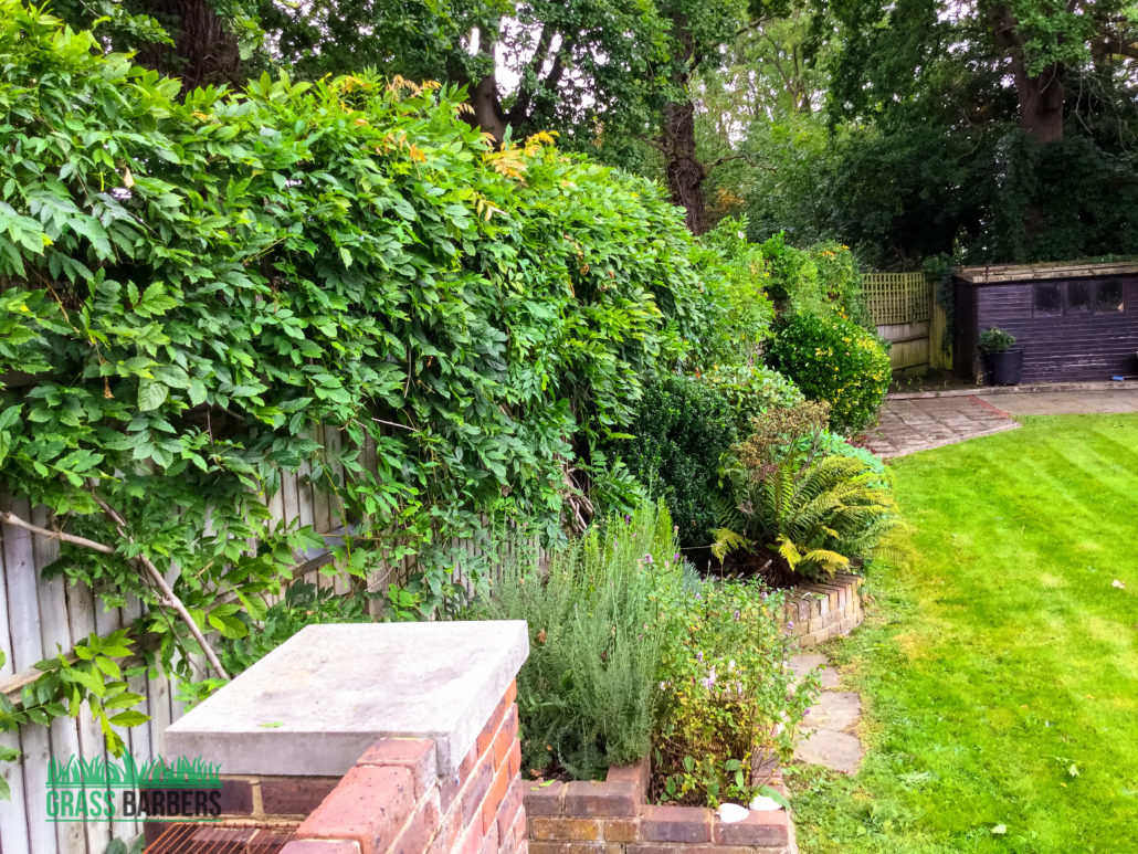 Garden maintenance project in shirley cr0 gardener for Garden maintenance