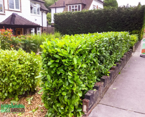 Grass Cutting Project in South Croydon CR2