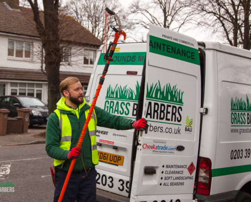 Gardening Services in Wallington SM6